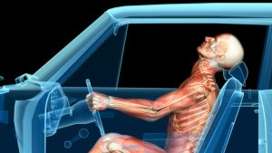 Human anatomy in a car crash, muscles and skeleton